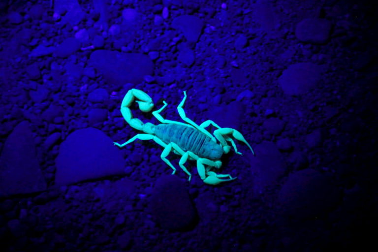 Night of the Scorpion summary- An easy explanation